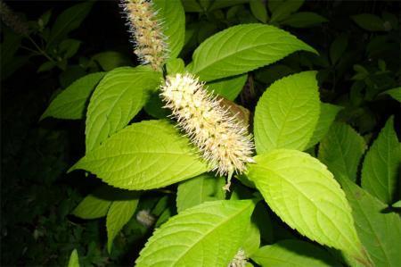 Welk is de naam van deze plant