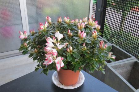 welk leuk plantje is dit?