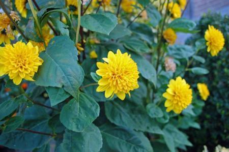 welke bloem is dit