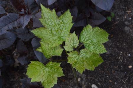 identificatie van planten