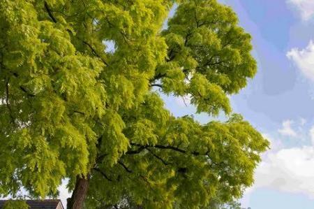 Wat voor boom