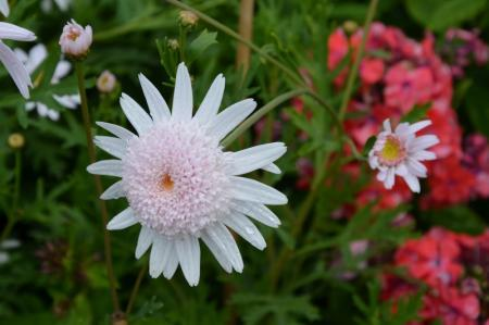 welke bloem is dit?