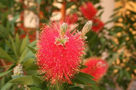 Wie weet de naam van deze plant?