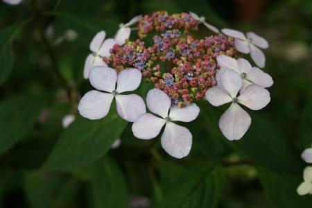 Het draaien van de niet-fertiele bloemen bij Horte