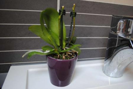 2 mini orchideeen scheiden