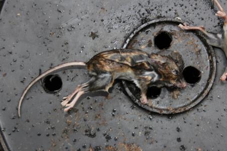Twee muizen