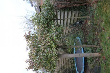 Nieuw huis , nieuwe tuin, welke boom is dit? (3)