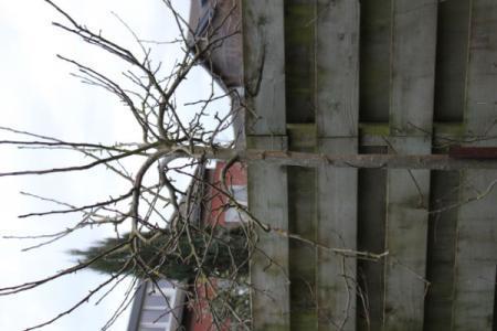 Nieuw huis , nieuwe tuin, welke boom is dit? (7d)