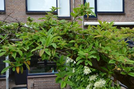 Wat voor soort boom is dit?