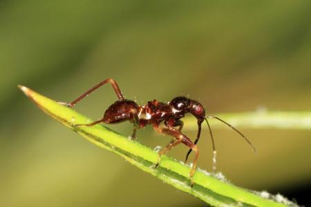 insect ?????????  wie weet wat het is ????