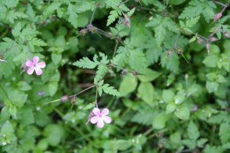 Welke bloemen zijn dit? Deel 2