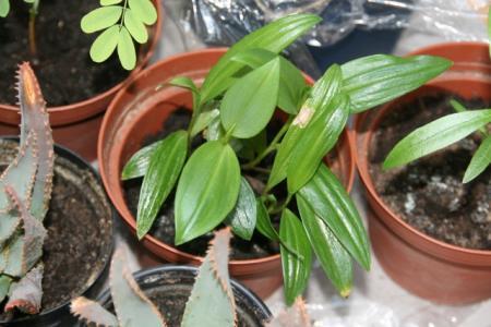 Hoe heet deze middelste plant