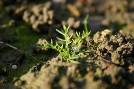 naam plantje