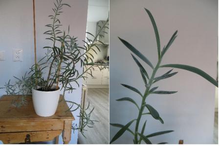 Wie kan mij helpen aan de naam van deze plant?