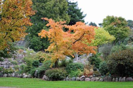 Herfst in de botanische tuin Kopenhagen