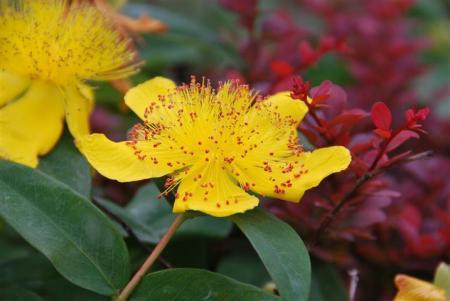 Stuik met gele bloemen
