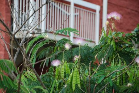 Welke ((sub)tropische) boom/ struik is dit?