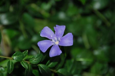 Wit trosje / paars bloemetje