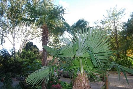 palmen weer 100% dit jaar liever geen horrorwinter