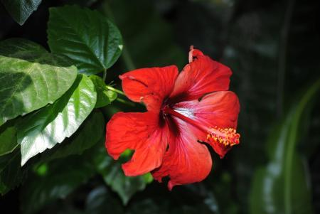 De naam van deze plant