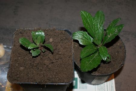 Plantherkenning