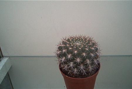 Welke cactussen