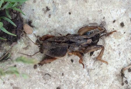 Wat is dit dan voor insect?