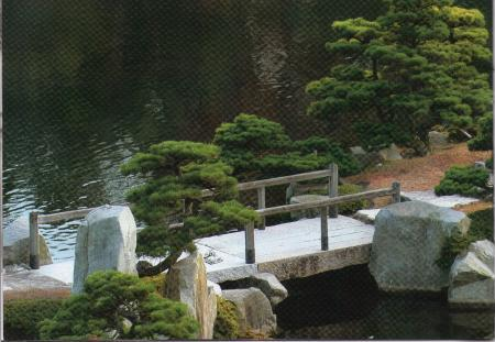 Welke naaldboom is dit?