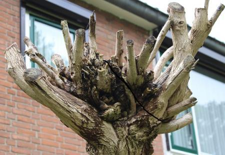 is deze boom dood?