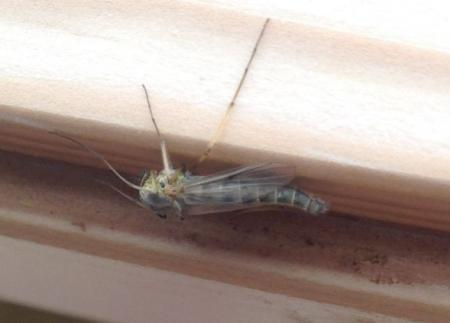 Is dit een gewone mug of?