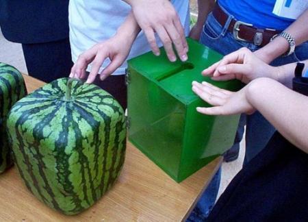 Vierkante watermeloenen
