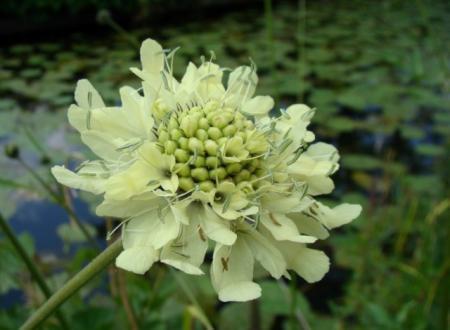 Allang zoekende, bloem vastgelegd, geen blad :(