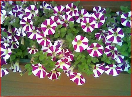 welke bloemen zijn dit