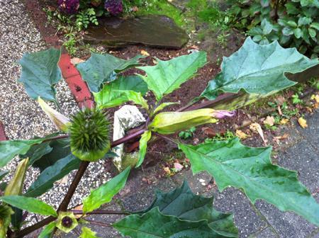 Onbekend struikje in de tuin