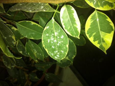 witte pluisjes op blad