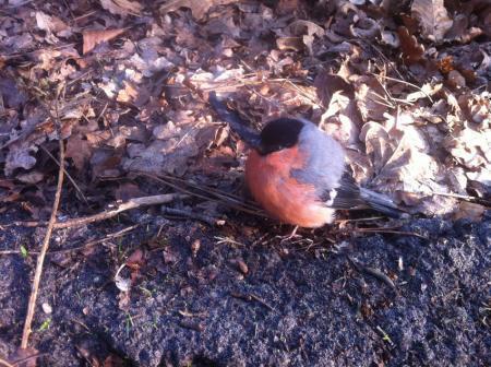 Weet iemand wat voor vogel dit is?