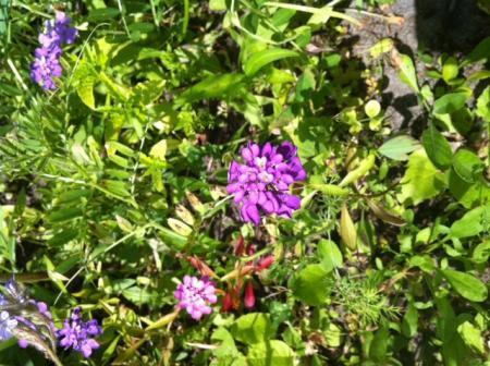 bloemen in zaadmengsel