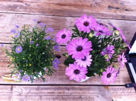 Welke bloemen/planten zijn dit?