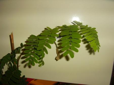 welke plant is dit ?