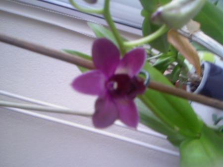 Eindelijk weer bloemen