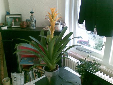 Hoe heten deze plant en hoe verzorgik hem?