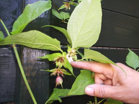 wie kent deze plant
