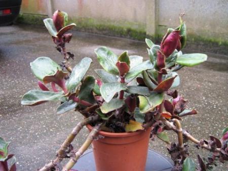 hoe heet deze plant