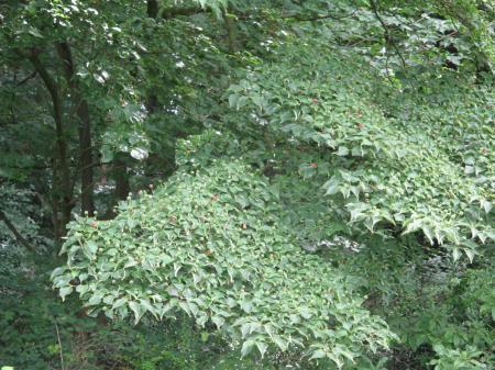 Wie weet wat voor een struik of boom dit is?