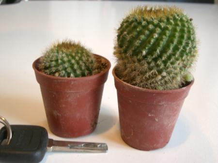 Id cactusje 2