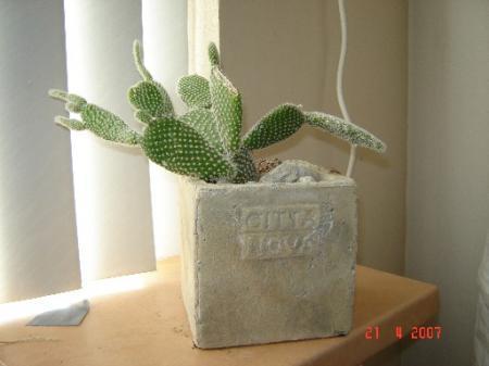 Hoe kan ik deze cactus goed houden?