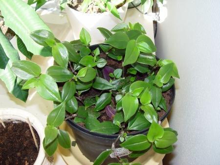 Wie kent deze plant?