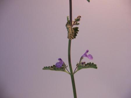 Wie kan deze plant identificeren?