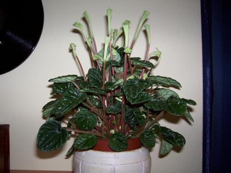 weet iemand de naam van deze plant?
