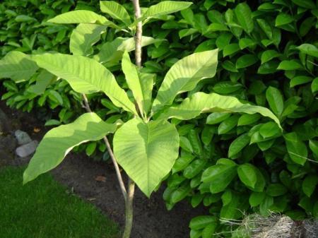 wie kent deze boom